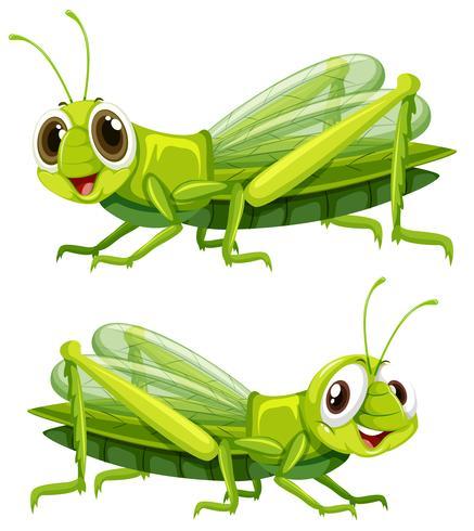 Deux sauterelles au visage heureux vecteur