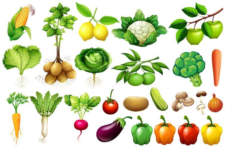 Divers types de légumes vecteur