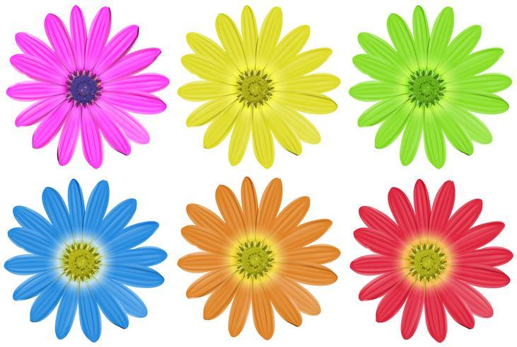 Fleurs colorées vecteur