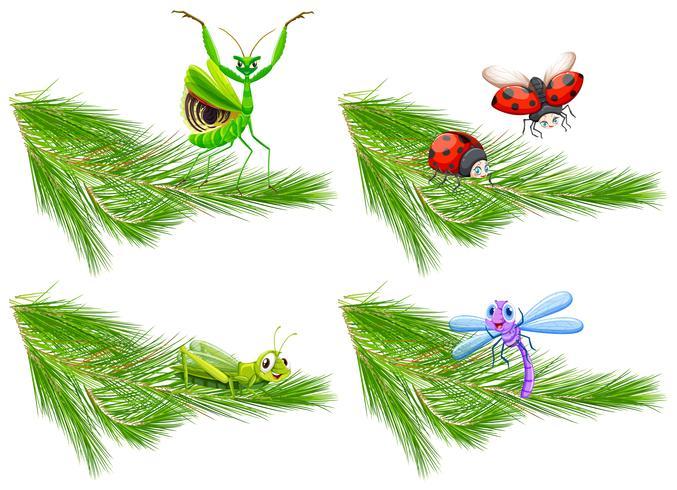 Insecte sur une branche d'arbre de pin vecteur