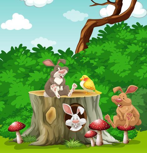 Lapins et oiseaux dans le jardin vecteur