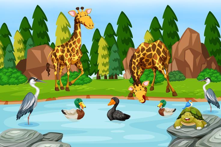 Nombreux animaux près de la rivière vecteur