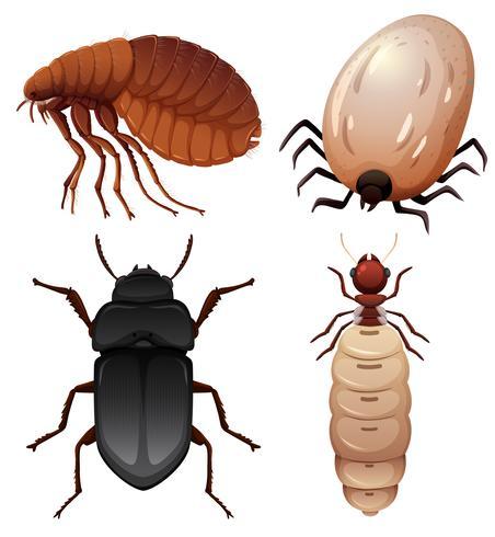 Ensemble d'insectes sur fond blanc vecteur