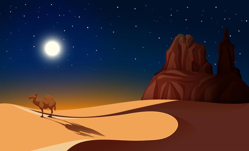 Chameau dans le désert la nuit vecteur