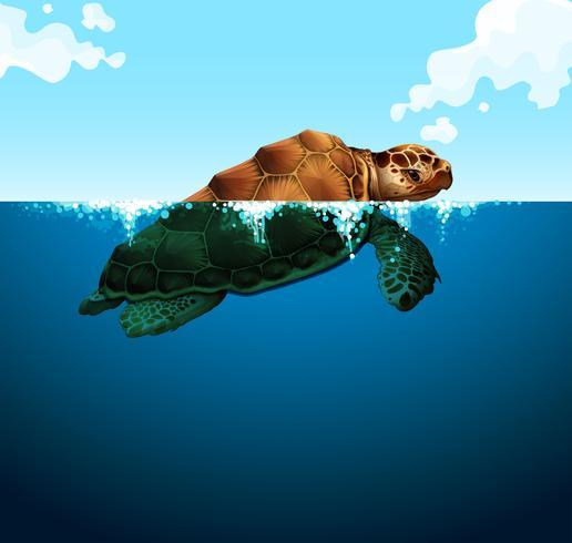 Tortue nageant dans l'océan vecteur
