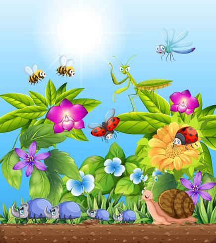 Différents types d'insectes dans le jardin vecteur