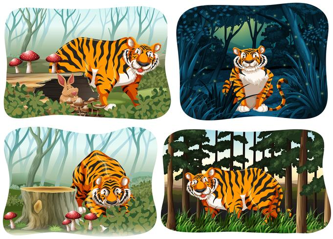 Quatre scènes de tigre vivant dans la forêt vecteur