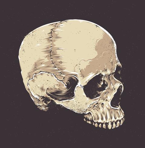 Crâne anatomique grunge vecteur