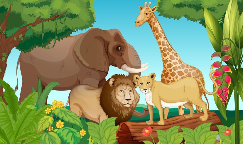 Animaux dans la jungle vecteur