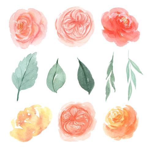 Aquarelle de fleurs aquarelle isolé peint à la main de fleurs d'aquarelle vecteur