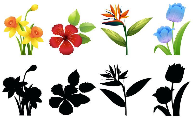 Quatre types de fleurs sur fond blanc vecteur