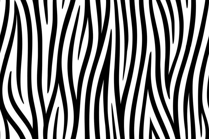 Fond transparent de peau de zèbre sur l'art graphique vectoriel. vecteur