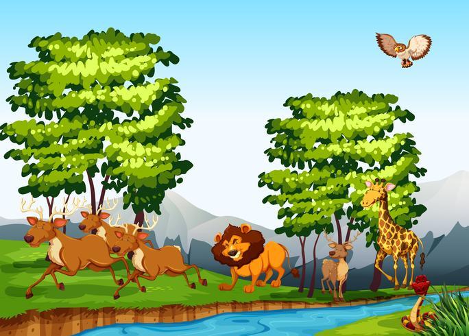 Animaux sauvages dans la forêt pendant la journée vecteur