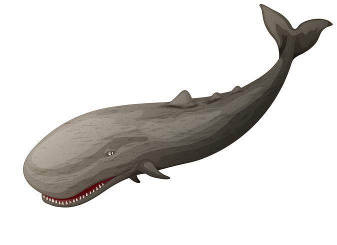 baleine vecteur
