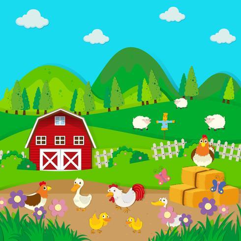 Poulets et canards à la ferme vecteur