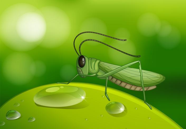 Sauterelle sur feuille verte vecteur