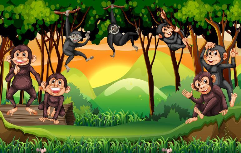 Singes grimpant à l'arbre dans la jungle vecteur