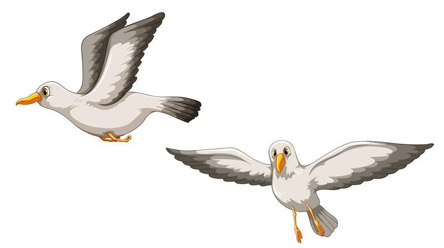 Des oiseaux vecteur