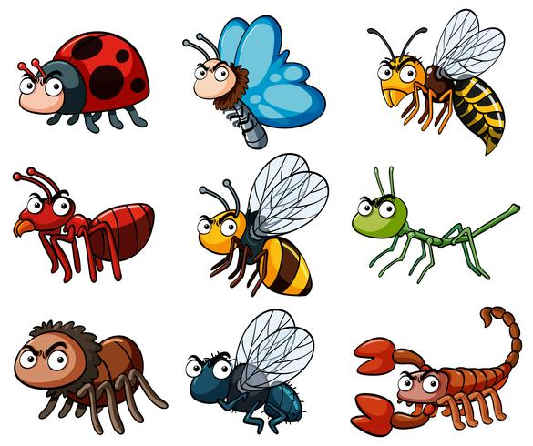 Différents types d'insectes sauvages vecteur