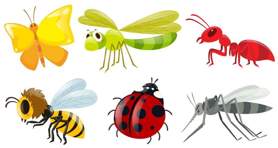 Différents types d'insectes vecteur
