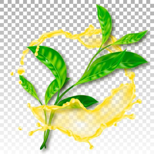 Feuilles de thé réalistes. Splash avec des gouttes. Illustration vectorielle vecteur