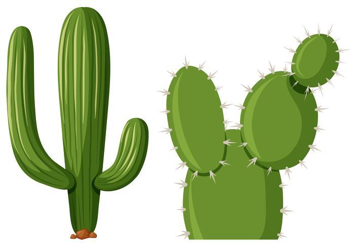Deux types de plante de cactus vecteur