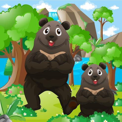 Deux ours dans la forêt vecteur