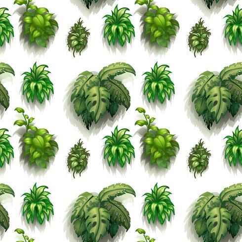 Plantes sans soudure vecteur