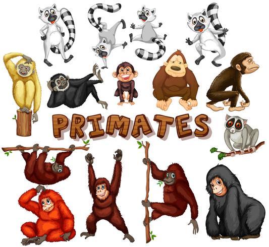 Différents types de primates vecteur