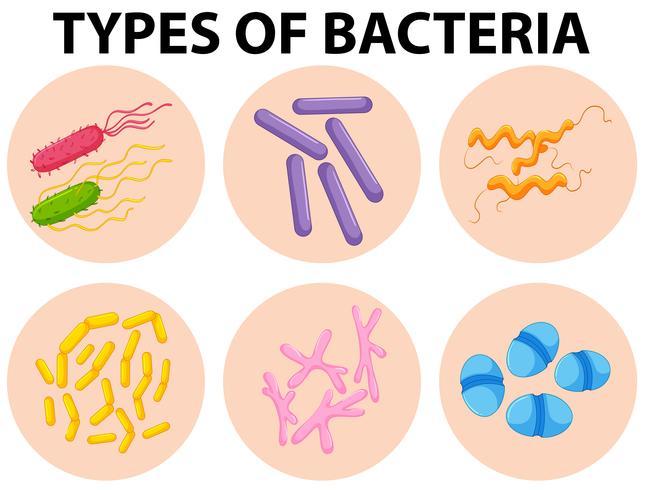 Différents types de bactéries vecteur