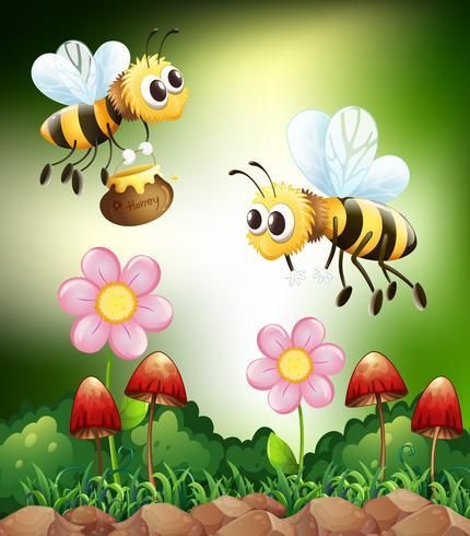 Abeille et miel vecteur