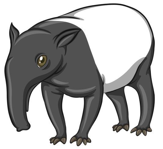 tapir vecteur