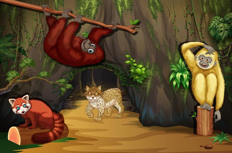 Animaux sauvages dans la grotte vecteur