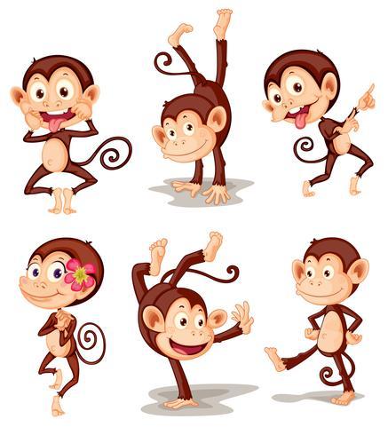 Série de singe vecteur