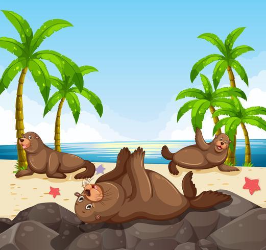 Des phoques s'amusant sur la plage vecteur