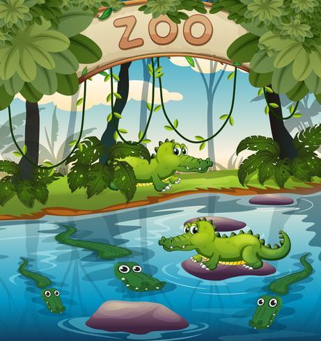Crocodile au zoo vecteur