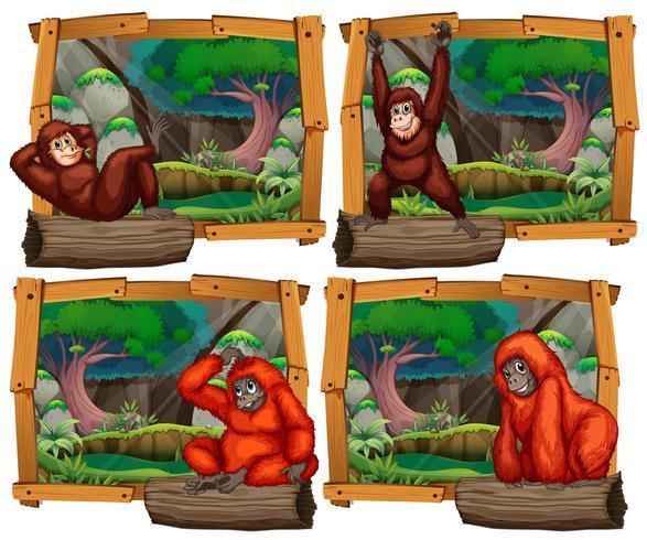 Quatre scènes de singe dans la jungle vecteur