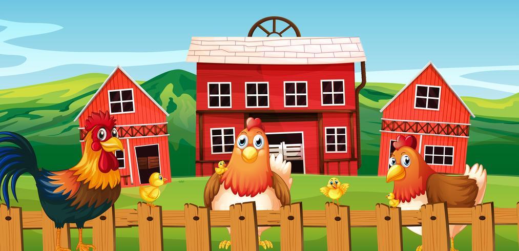 Famille de poulet à la ferme vecteur