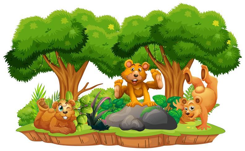 Ours sur une île isolée de la jungle vecteur