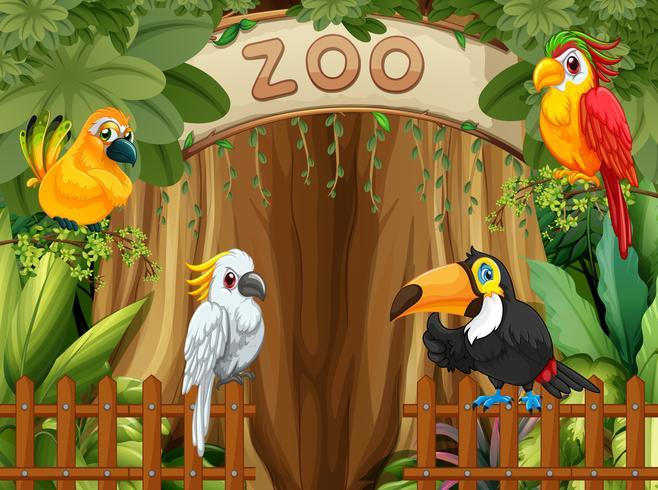 Oiseau au zoo vecteur
