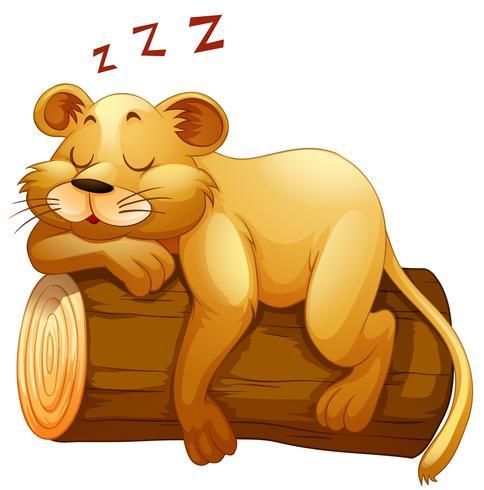 Petite coupe de lion dormant sur la bûche vecteur