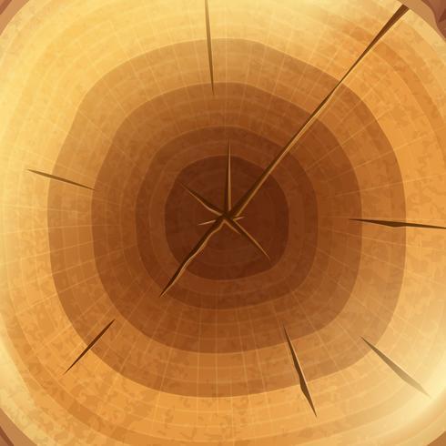 Fond d'écran coupe transversale en bois vecteur