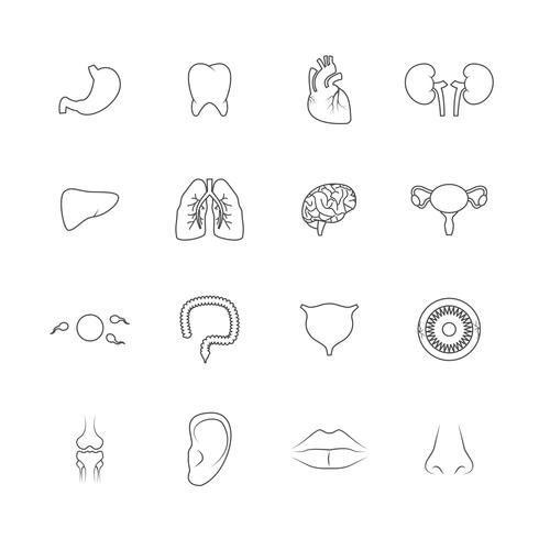 Contour d'icônes d'organes humains vecteur