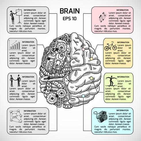Hémisphères cérébraux esquisse infographique vecteur