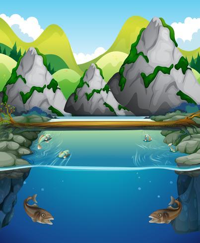 Scène de rivière avec poisson et montagne vecteur