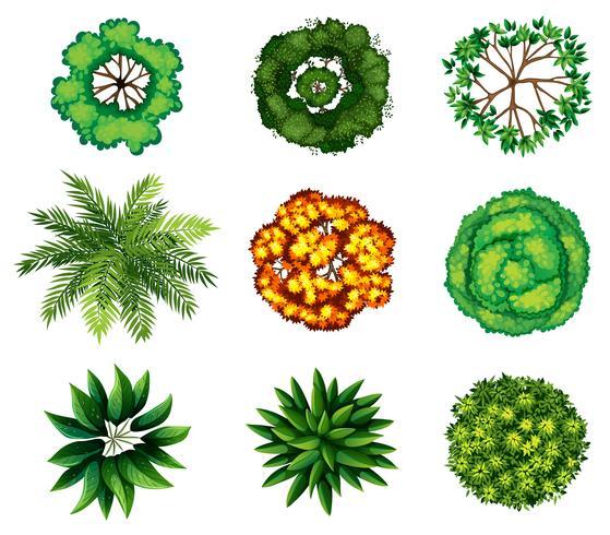 Un groupe de plantes vecteur