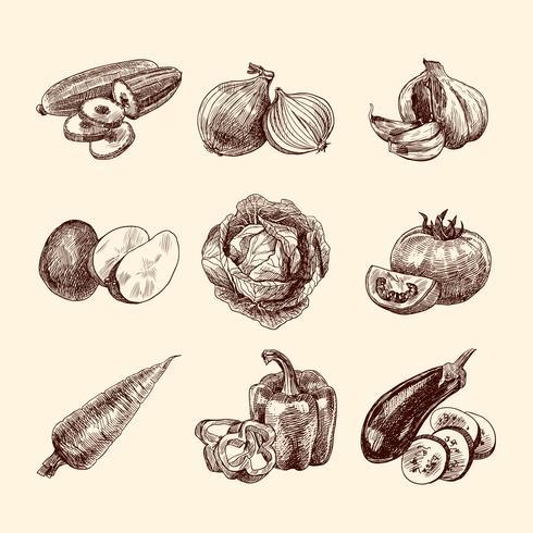 Ensemble de croquis de légumes vecteur
