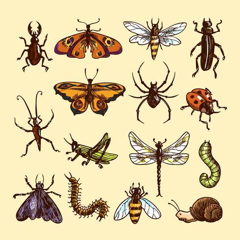 Ensemble de croquis d'insectes vecteur