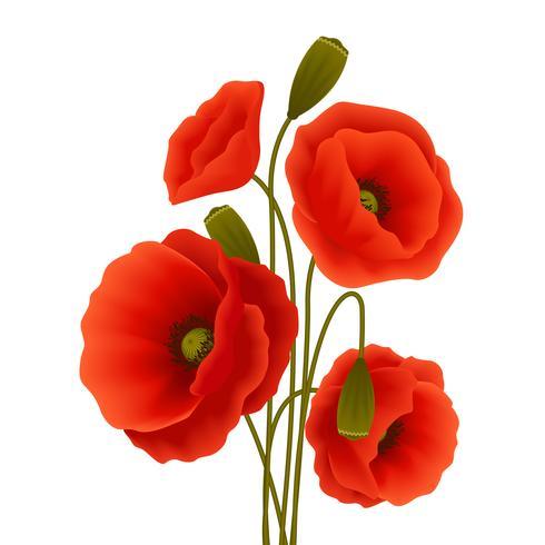 Affiche de fleur de pavot vecteur