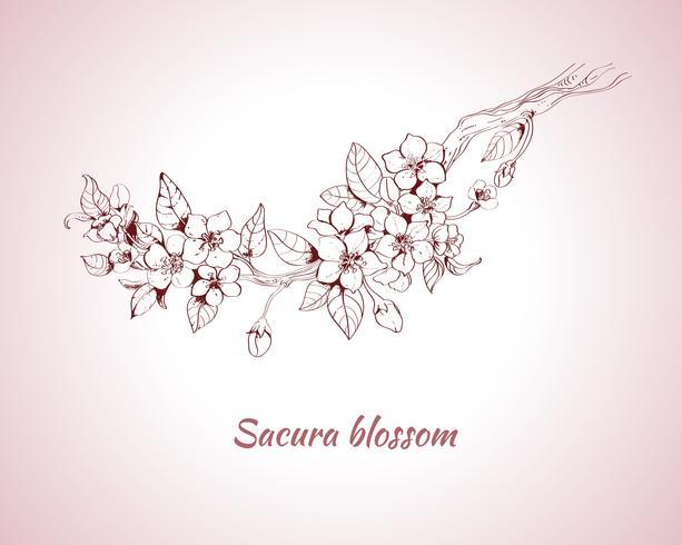 Esquisse de fleur de Sakura vecteur